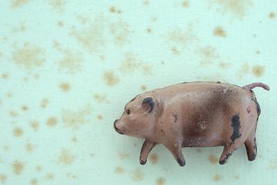 Plump Pig by Den Reader