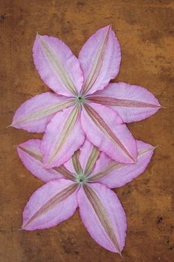 Purple Flowers by Den Reader