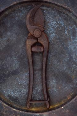 Rusty Old Secateurs by Den Reader
