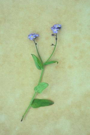 Single Flower