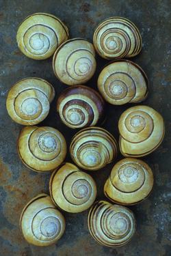 Thirteen Shells by Den Reader