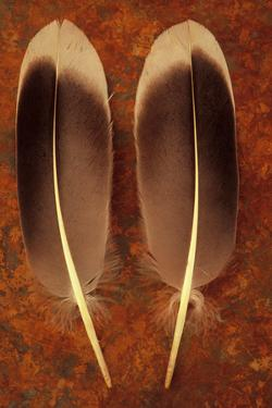 Two Black And White Feathers by Den Reader