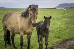 Mare and Foal by dendron