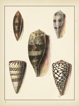 Antique Shells IV