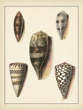 Antique Shells IV by Denis Diderot