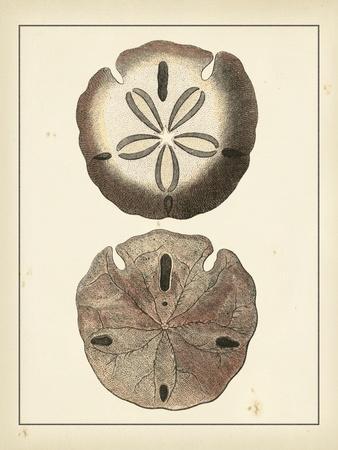 Antique Shells V