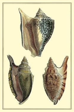 Classic Shells II by Denis Diderot