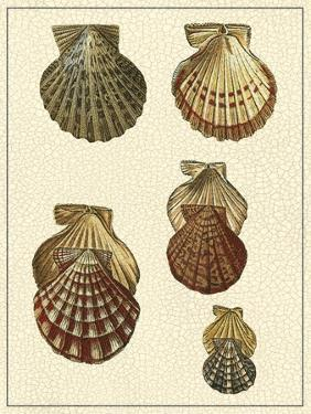 Crackled Antique Shells I by Denis Diderot
