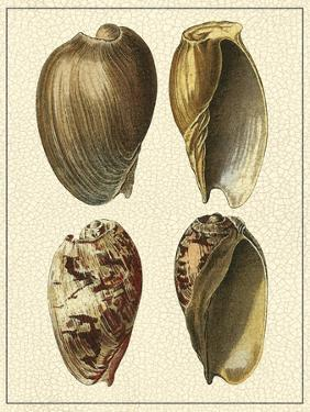 Crackled Antique Shells II by Denis Diderot