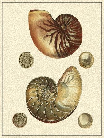 Crackled Antique Shells VII