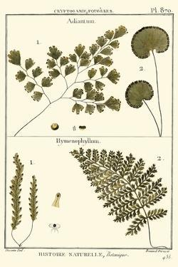 Fern Classification IV by Denis Diderot