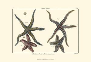 Sea Shells IX by Denis Diderot
