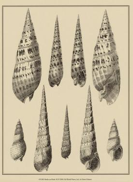 Shells on Khaki IX by Denis Diderot