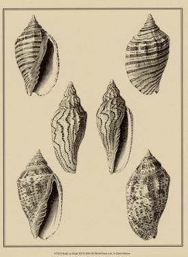 Shells on Khaki XII by Denis Diderot