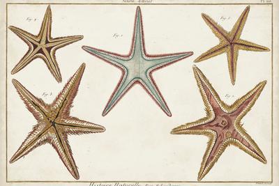 Starfish Naturelle I