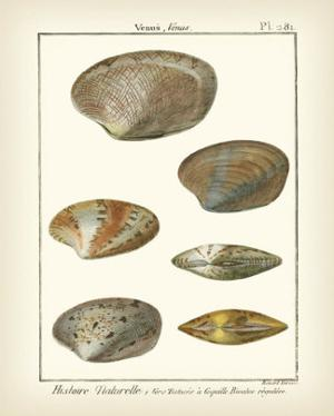 Venus Shells, Pl.281 by Denis Diderot