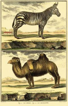 Zebra and Camel by Denis Diderot