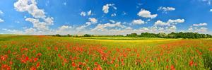 Poppy Field in Summer Countryside by Denis Lazarenko