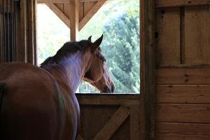 Horse in stall in rural Rappahannock County, Virginia, USA by Dennis Brack