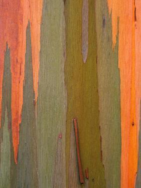 Detail of Eucalyptus Tree Bark, Kauai, Hawaii, USA by Dennis Flaherty