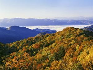Forest in Autumn Color from Shot Beech Ridge, Great Smoky Mountains National Park, North Carolina by Dennis Flaherty