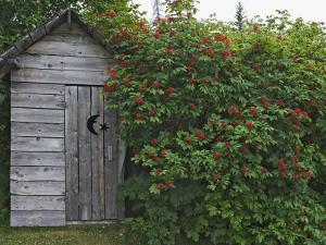 Outhouse Built in 1929 Surrounded by Blooming Elderberrys, Homer, Alaska, USA by Dennis Flaherty