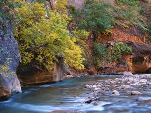 The Virgin River Flows Through the Narrows, Zion National Park, Utah, Usa by Dennis Flaherty