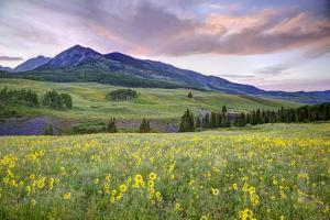 USA, Colorado, Crested Butte. Landscape of wildflowers and mountain. by Dennis Flaherty