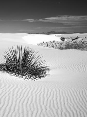 USA, New Mexico, White Sands National Monument. Bush in Desert Sand by Dennis Flaherty