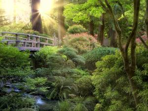 Awakening Garden I by Dennis Frates