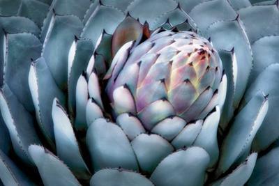 Blue Aloe by Dennis Frates