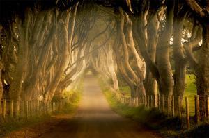 Enchanted Road by Dennis Frates