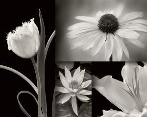Summer Garden I by Dennis Frates