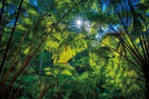 Tropical Shade by Dennis Frates