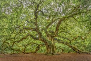 Angel Oak by Dennis Goodman