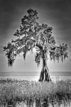 Big Cypress by Dennis Goodman