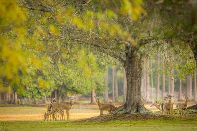 Deer Crossing by Dennis Goodman