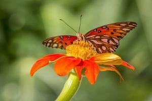 Dennis Goodman Butterfly by Dennis Goodman