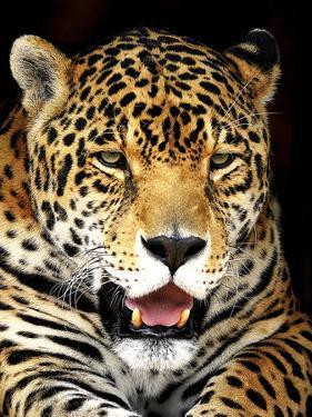 Leopard by Dennis Goodman