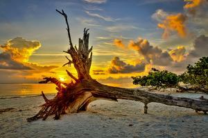 Sanibel Sunrise by Dennis Goodman