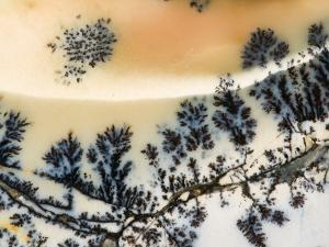 Close-Up of Amethyst Sage Agate, Nevada, USA by Dennis Kirkland