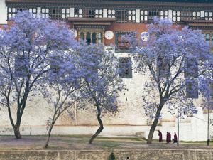 Monks, Punakha Dzong Palance, Bhutan by Dennis Kirkland