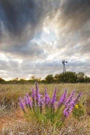 https://imgc.allpostersimages.com/img/posters/dense-blazing-star-liatris-and-windmill-on-texas-prairie-texas-usa_u-L-PXR7W90.jpg?p=0