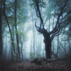 Dark Forest in Fog by Denys Bilytskyi