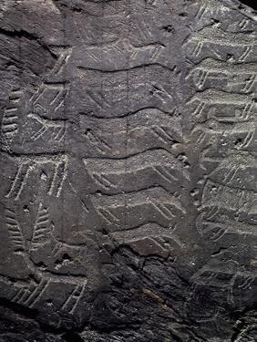 Depiction of Deer, Petroglyphs in Val Camonica