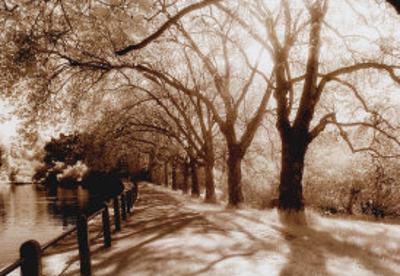 Hampstead Ponds, London