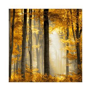 Sunlit Forest II by Derek Scott