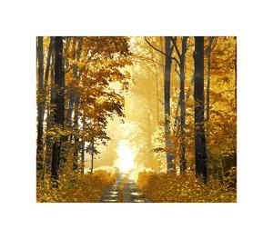 Sunlit Path by Derek Scott