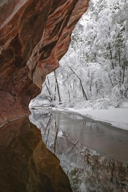 A Fresh Snowfall Blankets the West Fork of Oak Creek under Towering Sandstone Walls by Derek Von Briesen