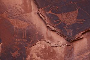 Native American Petroglyphs Depicting Animals on Red Rock by Derek Von Briesen
